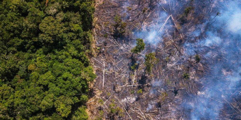 Амазония се приближава към необратима повратна точка