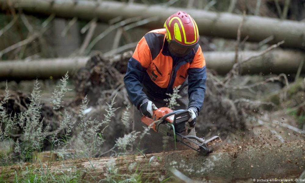 Германските гори на ръба на колапса, съобщават експерти