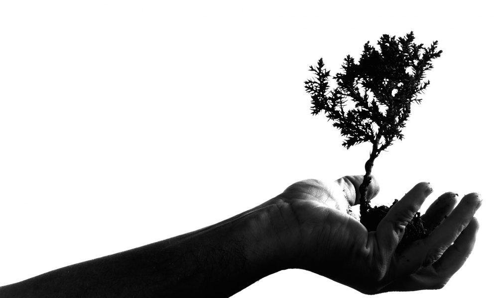 Планът на ЕС – 3 млрд. дървета за 10 години за справяне с кризата в областта на биологичното разнообразие