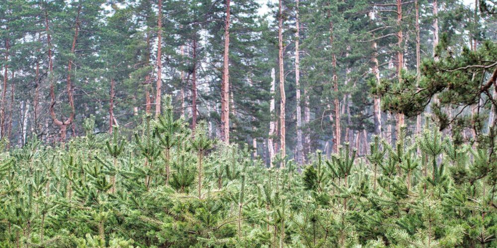 Агенцията по горите с нов изпълнителен директор