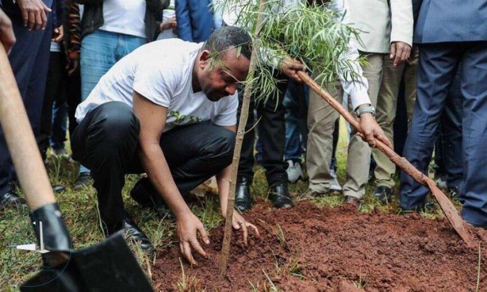 Етиопия твърди, че засадила 224 мил. дървета за 1 ден, за да счупи световен рекорд