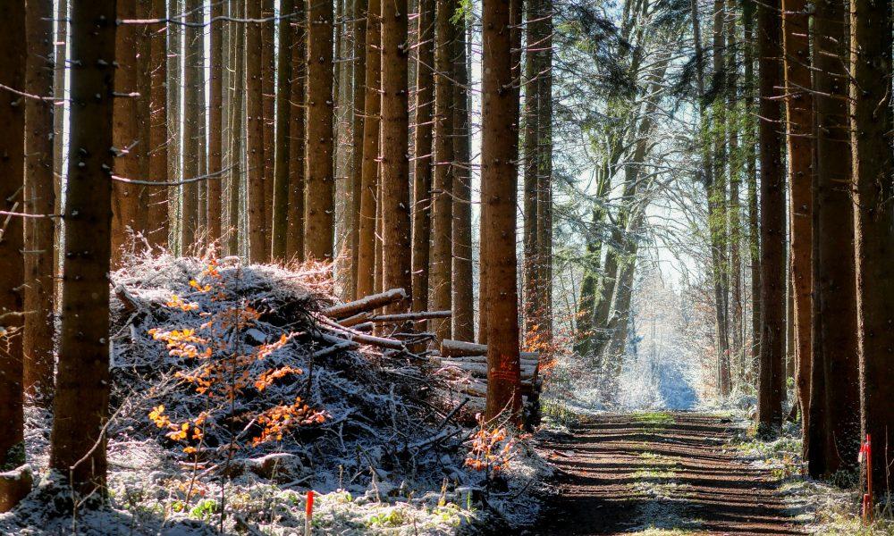 Държавните предприятия в кампания за закупуване на частни горски имоти