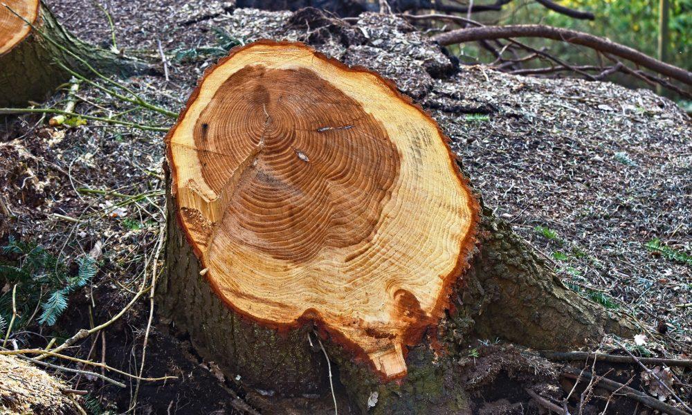 ИАГ организира масирани проверка за незаконен дърводобив в цялата страна